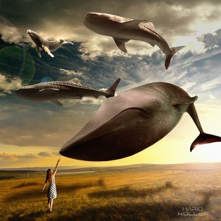 flying-whales